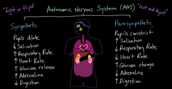 Source: Khan Academy of Medicine